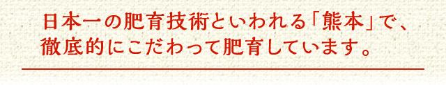 日本一の肥育技術といわれる「熊本」で、徹底的にこだわって肥育しています。