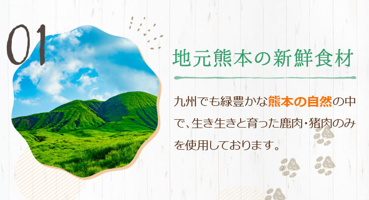 地元熊本の新鮮食材