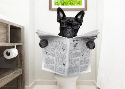トイレをする犬
