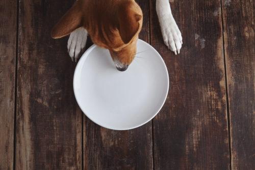餌を食べてしまった犬
