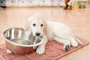 餌を食べた子犬