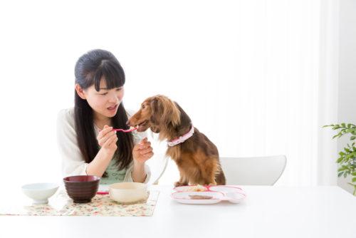 食事を与えられる犬