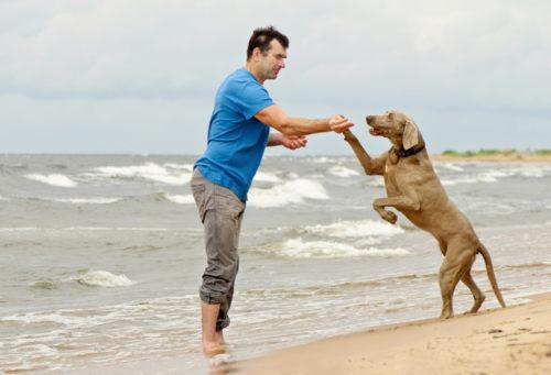 砂浜で飼い主と遊ぶ犬