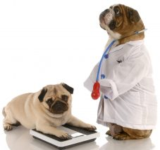 白衣を着た犬と体重計にのる犬