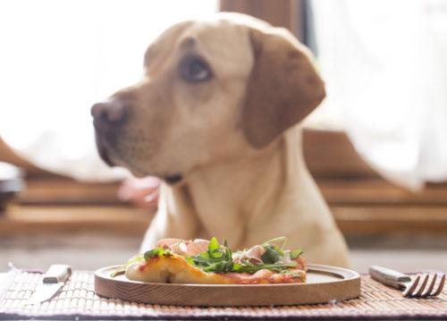 食事を目の前に置かれている犬